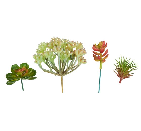 Mini-succulentes VBS, grandes, 4 pc.